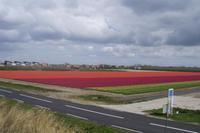 Tuplenfelder auf dem Weg nach Den Helder
