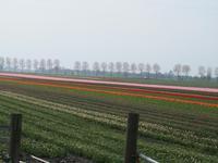 Wir erblicken die ersten Tulpenfelder