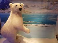 Hurtigrute, Tromsö, Polarmuseum
