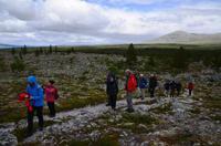 087 Femundsmarka Nationalpark