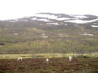 Blick ins Sennalandet