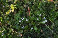 076 Blumen auf der Nordkapinsel