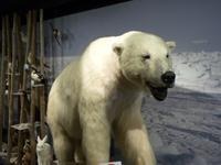 131 Hammerfest - Eisbärenklub