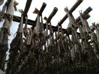 Trockenfischlager auf den Lofoten