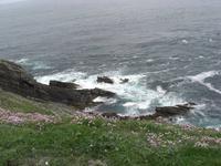 an den Klippen im Süden - Shetland Inseln