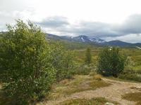 Fahrt über das Dovrefjell