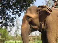 Elefantenbriefing im Chitwan