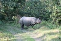 Nashörner im Chitwan-Nationalpark