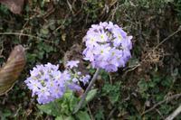Wanderung auf dem Dochula Nature Trail