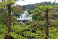Thermalfelder von Whakarewarewa in Te Puia (Rotorua)