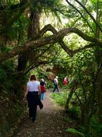 Rimu Walk in Ohakune