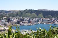 Auf dem Mt. Victoria (Aussichtspunkt in Wellington)
