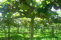 Besuch einer Kiwi-Farm bei Cambridge