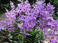 IMG_2271 Besuch im Botanischen Garten von Singapur
