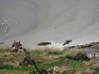 IMG_2445 Zu Besuch in der Pinguin-Aufzuchtstation auf der Otago Halbinsel