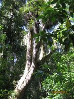 IMG_2568 Auf Wanderung im Tongariro Nationalpark