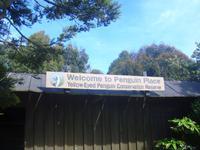 Besuch des Gelbaugenpinguin Reservat