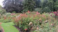 0147 Christchurch - Botanischer Garten -