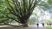 0154 Christchurch - Botanischer Garten -