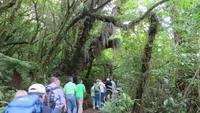 1061 Ohakune - Wanderung auf dem Forest walk durch den herrlichen Wald