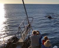 Milford Sound - Rundeise Neuseeland - Südinsel