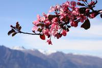 Blütenzauber am Bobs Peak