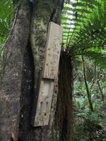 Auf dem Weg nach Paraparaumu - Bushwalk