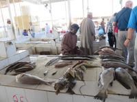 Dubai - Oman - Ausflug nach Barka zum Fischmarkt