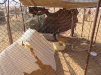 Auf dem Weg zum Wüstencamp