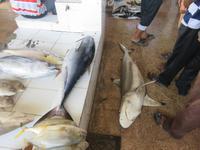 Besuch Fischmarkt Barka