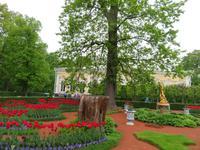 Peterhof Garten