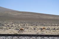 Busfahrt von Arequipa nach Puno (9)
