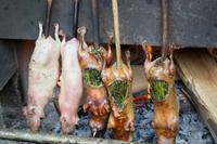 Meerschweinchen Essen (2)