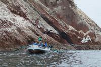 Tierwelt auf den Ballestas Inseln (58)