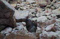 Tierwelt auf den Ballestas Inseln (87)