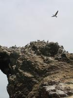 Bootsfahrt zu den Ballestas Inseln