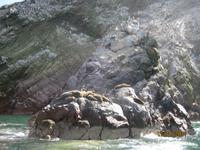 37_Unsere Bootsfahrt zu den Ballestas Inseln
