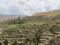 Terrassen bei den Uyu uyu Ruinen