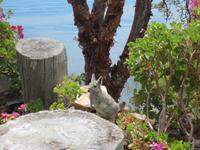 Viscacha auf der Insel Suasi