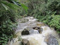 Wanderung durch den subtropischen Dschungel am Machu Pichu