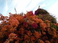 051_Blütenpracht im Hotel Majoro