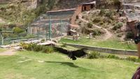 Condor im Tiersanatorium