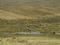 Von Arequipa ins Colca Tal