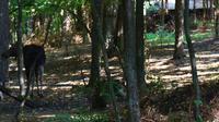 115 Masuren, Elche im Wildpark