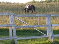 Auf dem Bauernhof (8)