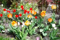Masuren - Frühlingsboten