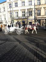 wunderschöne Pferdekutsche