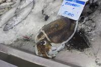 Fischmarkt Olhao_2