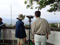 Sao Miguel, Walbeobachtung