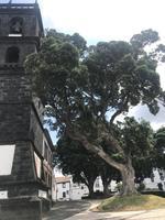 in Ribeira Grande